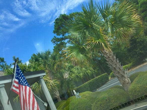US FLAG AND PALM TREE